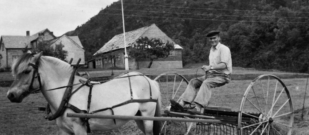 """Johhannes Vikane med rakemaskina i Neregarden, Håvikjo i Ølve, ca 1950. Øykjen """"Victoria"""" er oppkalla etter dronning Victoria av England."""