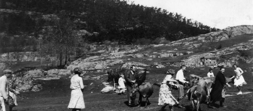 Løysing av kyrene i Neregarden, Håvikjo i Ølve, 17.mai 1932.