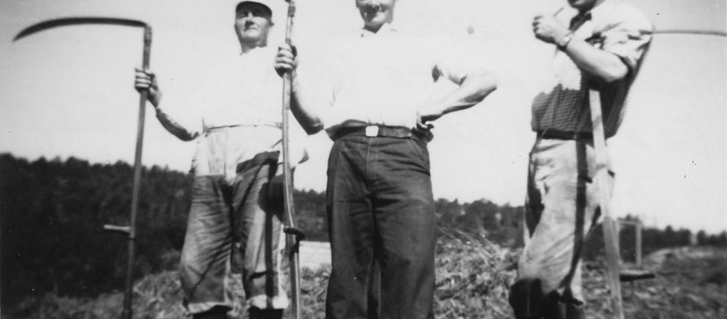 Tre staute slåttekarar i Neregarden, Håvikjo, Ølve,  år ca. 1945.  Frå venstre:  Hans Vikane med sønene Torleif og Johannes